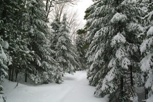 A snowy trail in the McCormick Wilderness